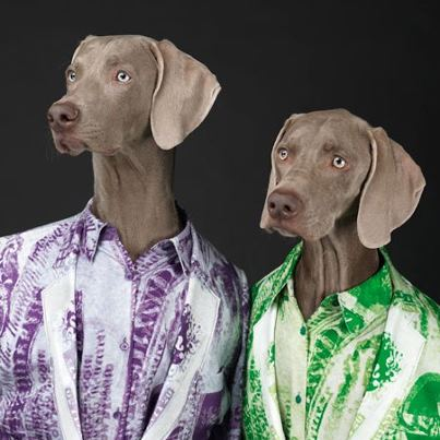 William Wegman Acne Weinamarer Dogs.1jpg Great Fashion Photographers  William Wegman shoots Weimaraner Dogs for Acne