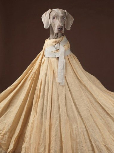 William Wegman Acne Weinamarer Dogs.3jpg e1363756742358 Great Fashion Photographers  William Wegman shoots Weimaraner Dogs for Acne